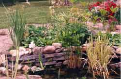 Pond area at the garden center
